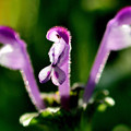 写真: 春を待つ花