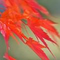 写真: 紅の流れ