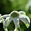 写真: 冬らしい花?