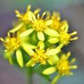 写真: 名残の黄色
