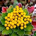 写真: 花も色づくとき