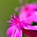 蕊が気になる花