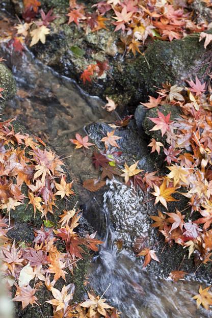 落ち葉と清流