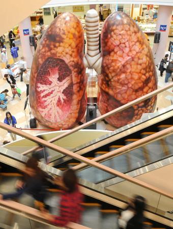 タールでべっとりの肺の模型