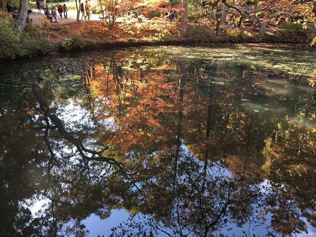 森林植物園2017