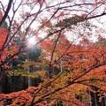写真: 紅葉と陽