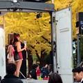 Photos: 観客は大銀杏-2