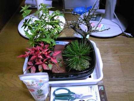盆栽セット141208s
