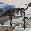 Photos: エドモントサウルス