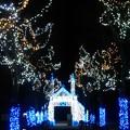 Photos: クリスマスイルミネーション☆彡