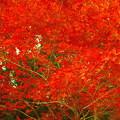 写真: 犬山寂光院の紅葉の紅葉(3)