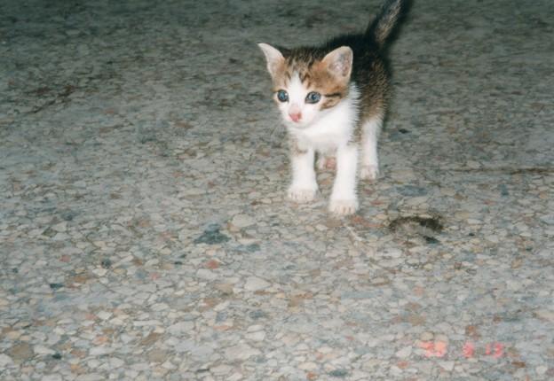 キューバの猫はスペイン語がお上手? ¿Hablas español?      ,Havana