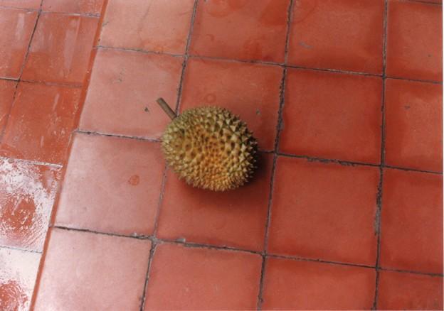 朔太郎のパロディ「ドリアンを食ひたしと思へどもドリアンはあまりに臭し・・Durians smell awful,but the taste is heavenly,Indonesia