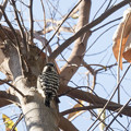 写真: 散歩道の野鳥2