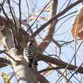 Photos: 散歩道の野鳥2