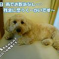 写真: 100519 くーかい of the day 1