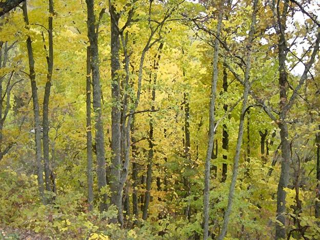 写真: 「ブローニュの森」もどき