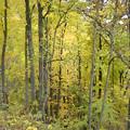 「ブローニュの森」もどき