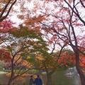 文京区の森