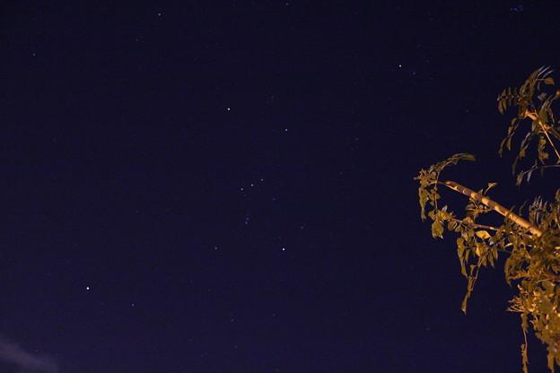 写真: オリオン座