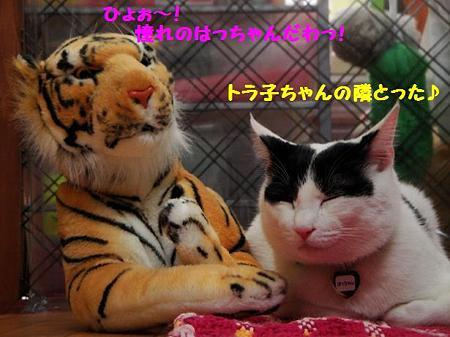 はっちゃん&トラ子1