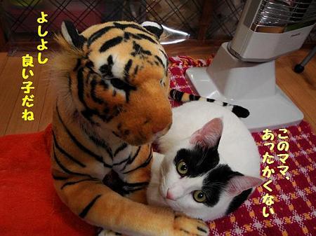 はっちゃん&トラ子3