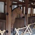 写真: 彦根城 馬屋 3