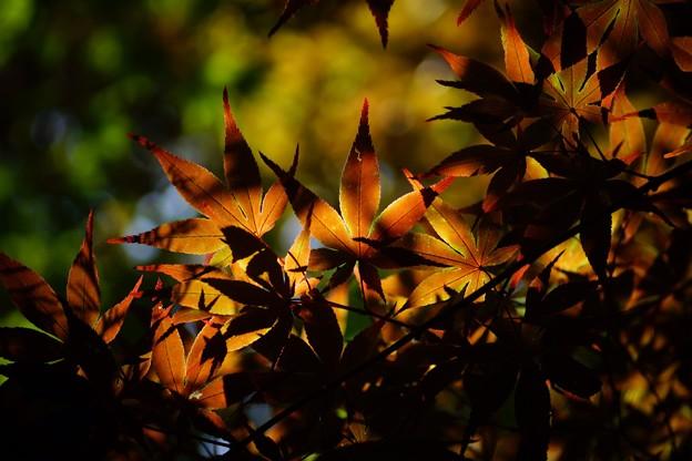 写真: 小さい秋