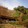 Photos: 茅葺き屋根の家