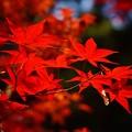 写真: 紅葉 14