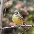 写真: 野鳥 3