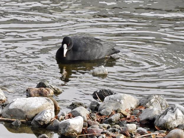 写真: 野鳥 28