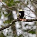 写真: 野鳥 32