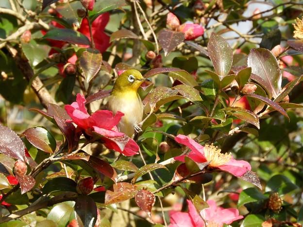 写真: 野鳥 33