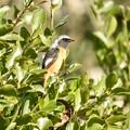 写真: 野鳥 34
