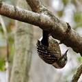 写真: 野鳥 35