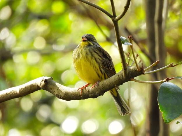 野鳥 39