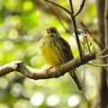写真: 野鳥 39