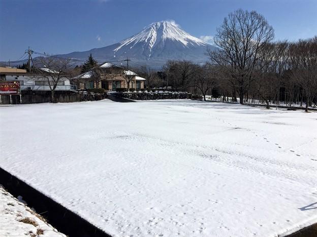 1月23日まかいの牧場からの富士山~ 雪はこんな感じ~道路は大丈夫そうです(^ ^)