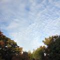 写真: 秋の雲 03112017