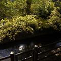 写真: 玉川上水 03112017
