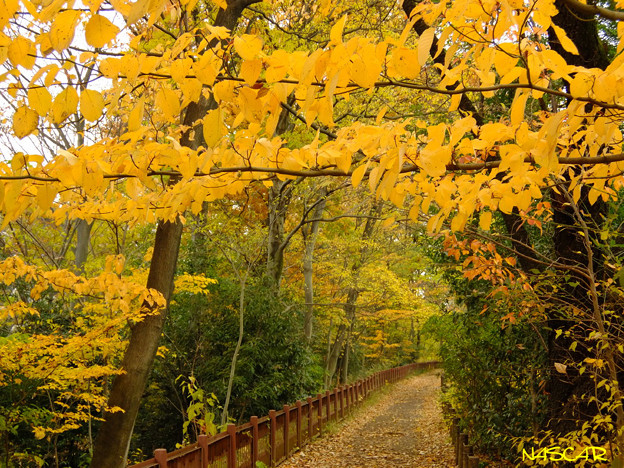 写真: 晩秋の散歩道 30112017
