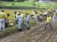 協働活動(稲刈り)の風景