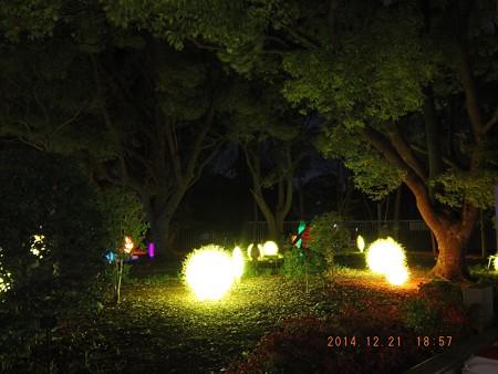 長居植物園ガーデンイルミネーション24