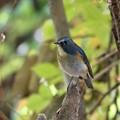 幸せを呼ぶ青い鳥2