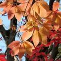 Photos: 紅葉いろいろ