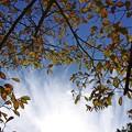 写真: 木の下で