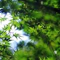 写真: 緑、輝く