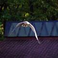 bird which
