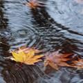季節の流れ